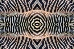 斑马样式和皮肤  库存照片