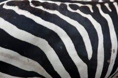 斑马模式 库存图片