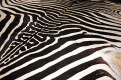 斑马皮肤纹理的宏观图片作为背景 库存图片