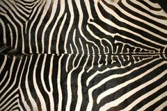 斑马皮肤纹理的宏观图片作为背景 库存照片