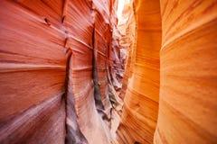 斑马砂岩波浪开槽峡谷犹他,美国 免版税库存照片