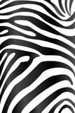 斑马纹理、Black&white背景、盖子网页、海报或者禁令 库存图片