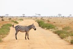 斑马线路在肯尼亚 免版税图库摄影