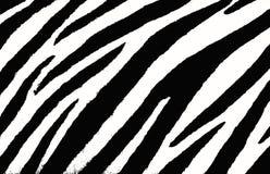 斑马背景 向量例证