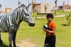 斑马非洲公园在阿斯旺,埃及 免版税库存照片
