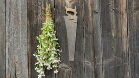 斜坡上的花园在老木墙壁上的草本束 股票录像