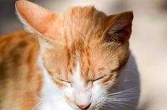 斜眼看在明亮的太阳的红色猫 免版税库存照片