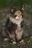 斜眼看猫 免版税库存照片