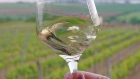 斟酒服务员打旋,品尝在玻璃的白酒在葡萄园 股票录像