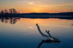 断枝在反对日落的湖 免版税图库摄影