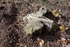 断枝在森林里 免版税库存图片