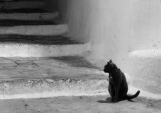 斯佩尔隆加拉齐奥意大利黑&白色恶意嘘声 免版税图库摄影
