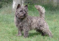 从斯凯岛,苏格兰的石标狗standig 免版税库存图片