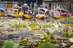 斯利那加,印度- 2013年10月17日:生活方式在Dal湖,所在地 免版税库存图片