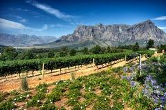 斯泰伦博斯美国运通酒路线,南非 免版税库存照片