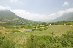 斯泰伦博斯酒葡萄园路线和谷,在开普敦外面,南非 免版税库存照片