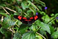 彻斯特动物园英国 库存图片