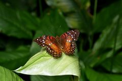 彻斯特动物园英国 图库摄影