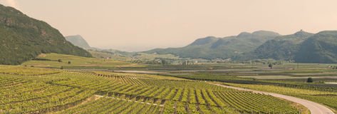 斯特拉达del Vino 免版税库存照片