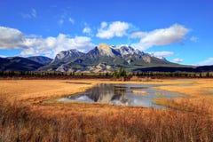 贾斯珀国家公园的金黄秋天颜色 库存照片