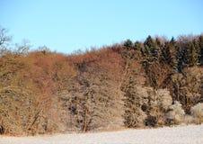 斯诺伊与积雪的领域和森林的冬天风景 免版税库存照片