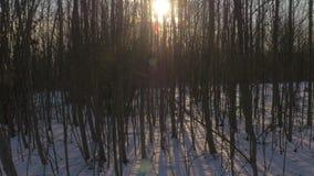 斯诺伊乡下公路在森林里 股票视频