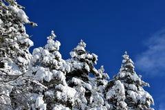 斯诺伊云杉和蓝天与云彩 库存照片
