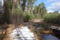 斯诺伊人行桥在森林里 库存图片