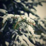 斯诺伊具球果圣诞树 冬天和圣诞节打过工的概念 免版税库存照片