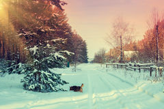 斯诺伊农村冬天风景 免版税库存照片