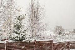 斯诺伊冬天云杉和桦树在木篱芭后 免版税库存图片