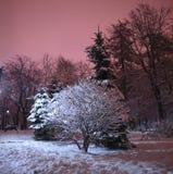 斯诺伊冬天公园在晚上 免版税库存图片