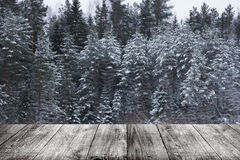 斯诺伊冬天在森林背景中 从黑暗的木ga的看法 免版税图库摄影