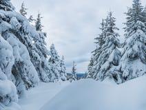斯诺伊冬天在森林 库存图片