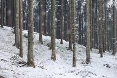 斯诺伊冬天季节森林风景 免版税库存照片