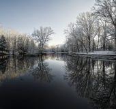斯诺伊冬天树反射 免版税图库摄影