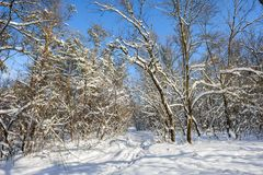 斯诺伊冬天森林 免版税库存照片