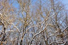 斯诺伊冬天森林 免版税图库摄影