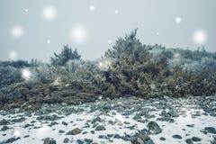 斯诺伊冬天横向 图库摄影