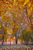 斯诺伊冬天秋天横向 免版税库存图片
