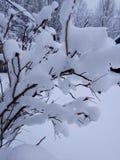 斯诺伊冬天站立了 库存图片