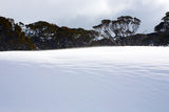 斯诺伊冬天风景 库存照片