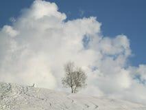 斯诺伊冬天风景 免版税库存图片