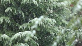 斯诺伊冬天,落在树的雪 影视素材
