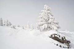 斯诺伊冬天 免版税库存图片