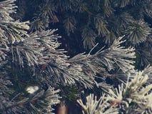 斯诺伊冷杉木在森林里 库存照片