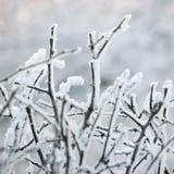 斯诺伊冷淡的树枝和枝杈、大详细的树冰宏观特写镜头、柔和的Bokeh细节、白弗罗斯特和雪背景 免版税库存图片