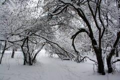 斯诺伊冷的冬天森林 免版税库存照片