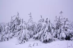 斯诺伊冷的冬天森林 图库摄影