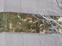 斯诺伊反射绿色地带博伊西爱达荷 库存照片
